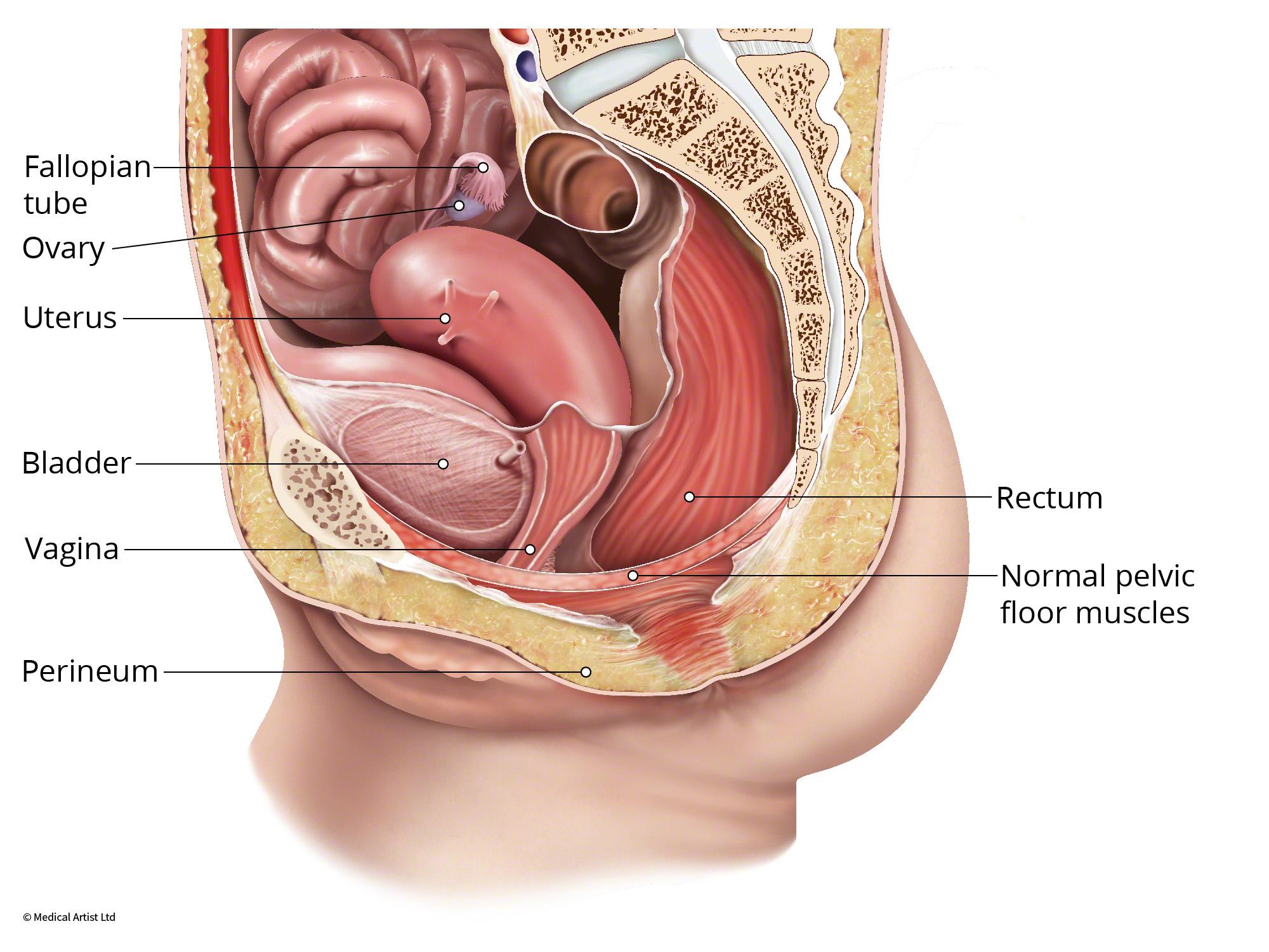 Perineal Descent Austin Urogynecology